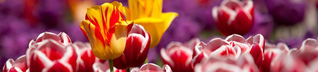 fiori primavera 2016