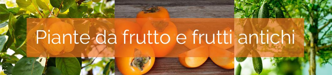 Centro-Verde-Toppi-ott17-piante-da-frutto