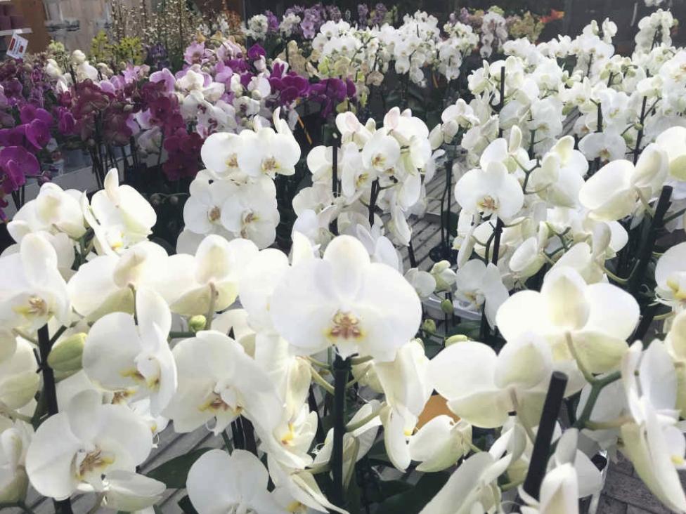 Toppi-Centro-Del-Verde-Origgio-Garden-Piante-Orchidee