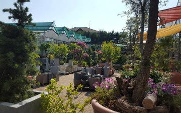 garden-piante-fiori-Toppi-saronno