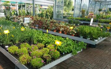 piante-esterno-perenni-garden-toppi-Saronno