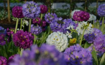 piante-fiori-centro-del-verde-toppi-saronno-2